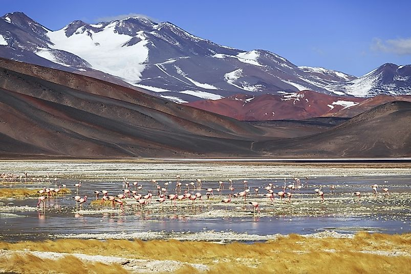 Black lagoons and their flamingos and other wetland birds lie at the foot of Monte Pissis.