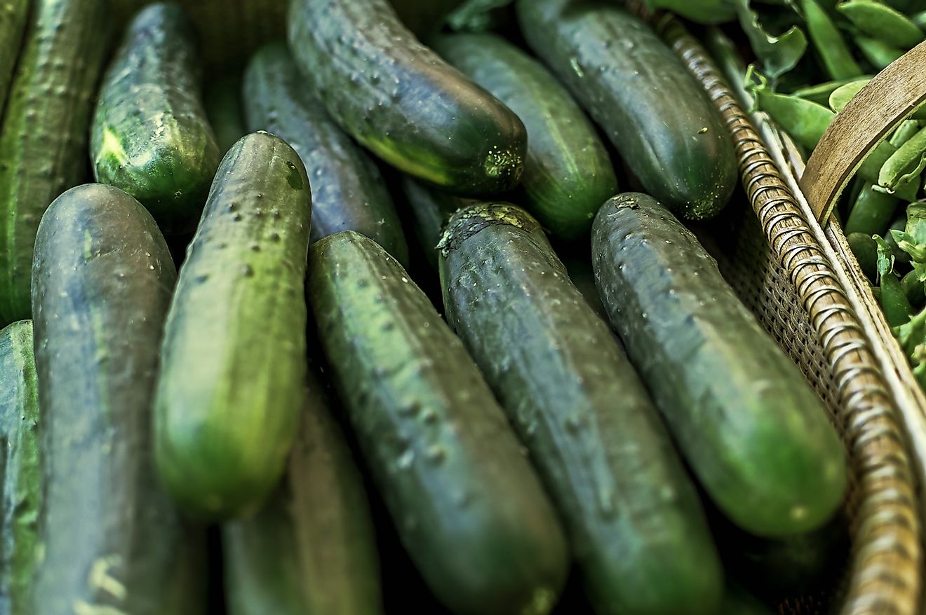 Levels of domestic consumption can help determine the amount of cucumbers and gherkins a given country produces regardless of international trade, with Russia and India serving as perfectly opposite examples.
