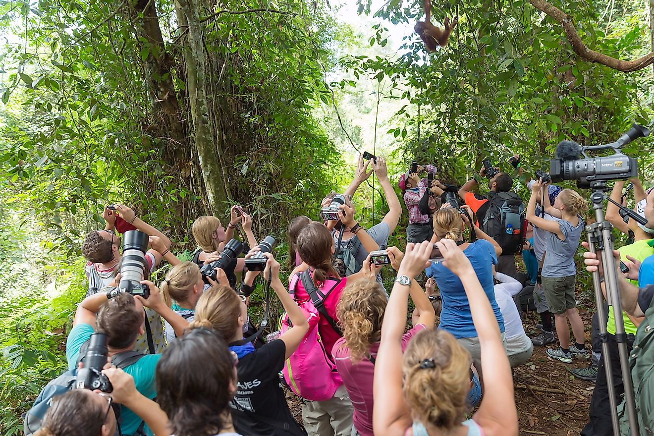 A group of tourists photographing a baby orangutan at the Gunung Leuser National Park in Indonesia. Image credit: Dennis van de Water/Shutterstock.com