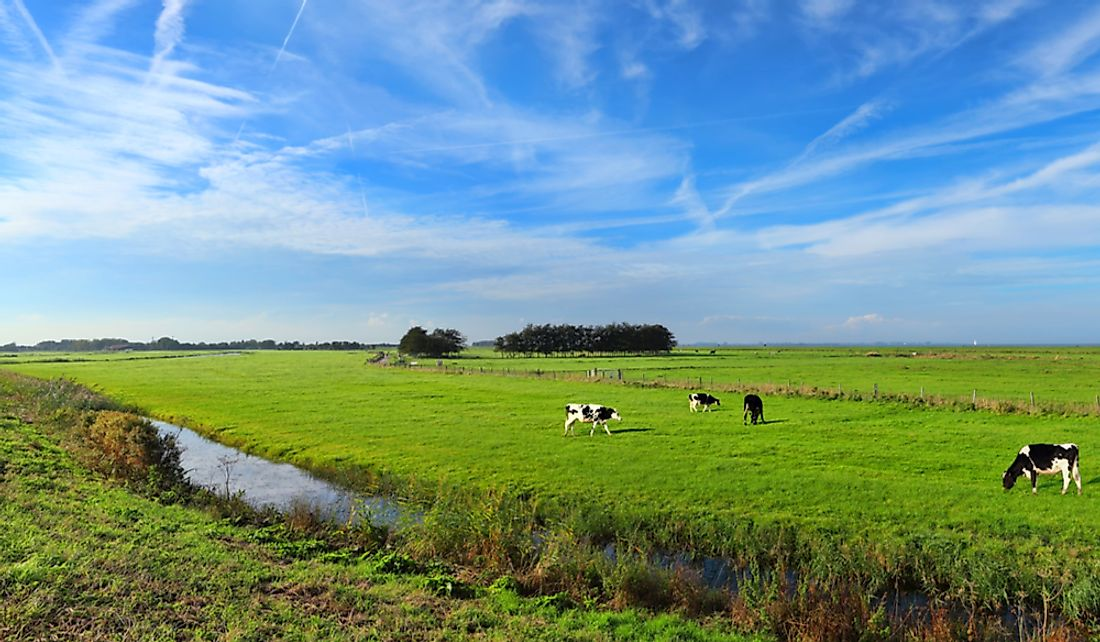 Water meadows are beneficial for livestock.