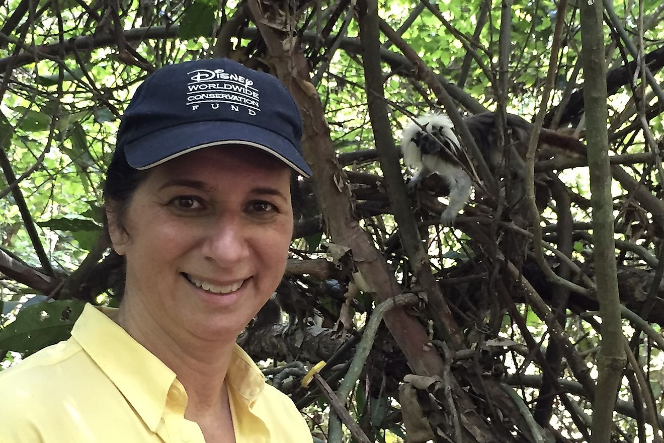 Dr. Anne Savage with a cotton-top tamarin in the background. Image credit: Proyecto Tití