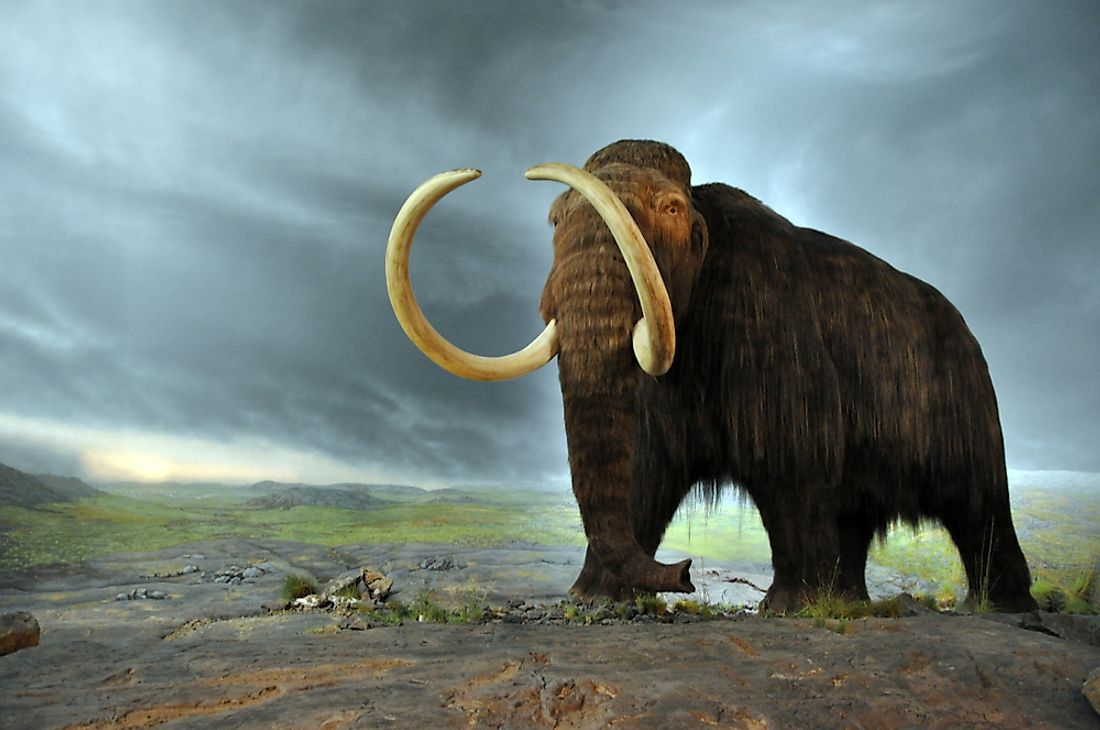 A rendering of a woolly mammoth.