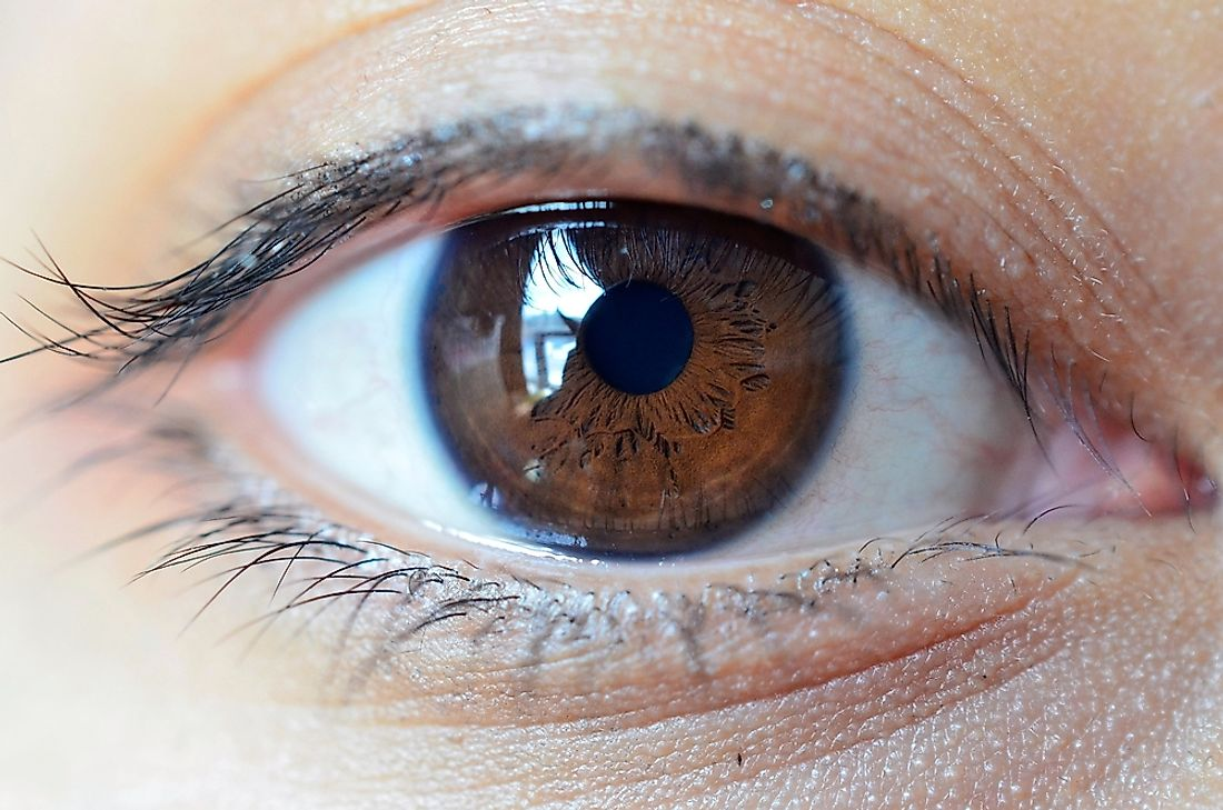 Brown eyes are possessed by over half of the world's population.