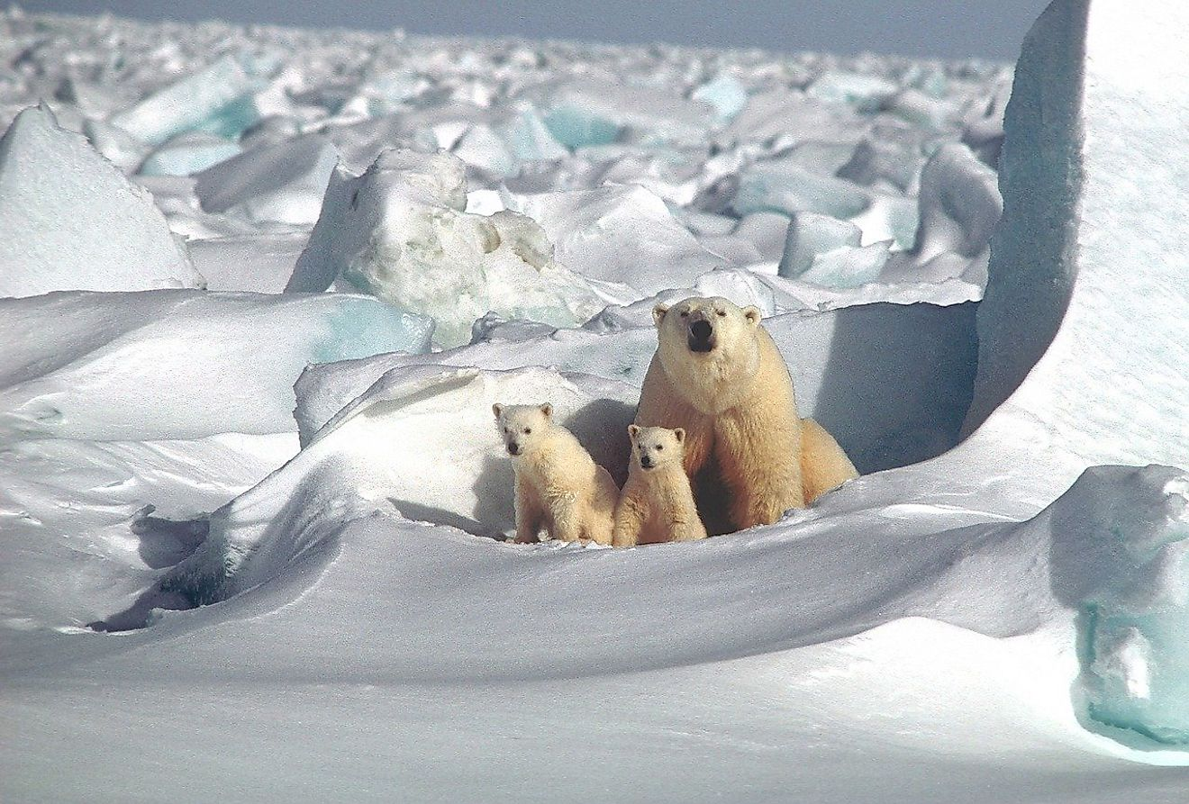 Polar bear mother with cubs. Image credit: Skeeze from Pixabay