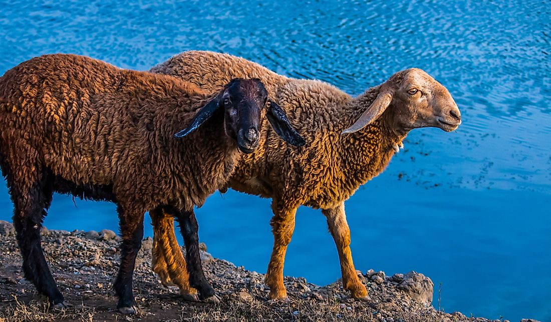 "Australia is known as the ""Home of the Golden Fleece"" because of its large sheep population and wool production."