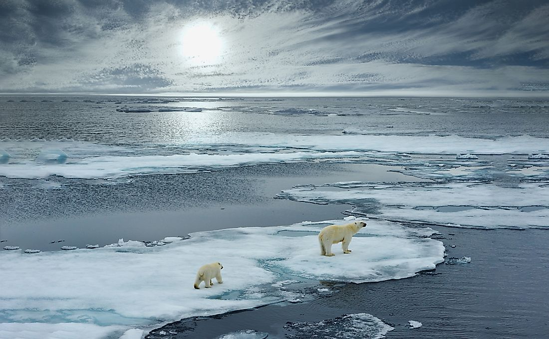 The water and frozen ice of the Arctic Ocean is home to many types of animal life.