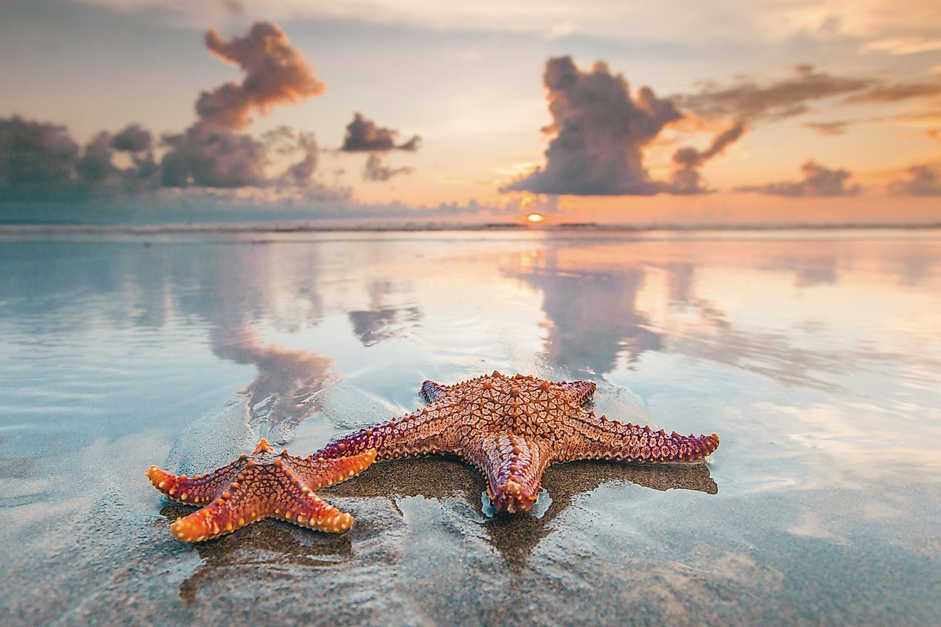 Starfish actually do have eyes, placed on the ends of each of their arms.