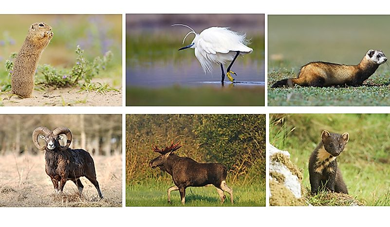 A selection of animals that live in Ukraine.