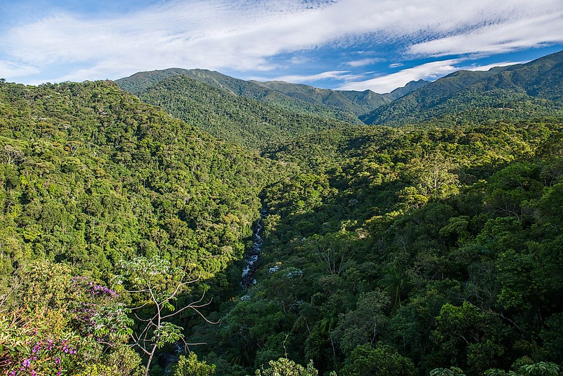 The Atlantic Rainforest is home to an incredibly array of biodiversity.
