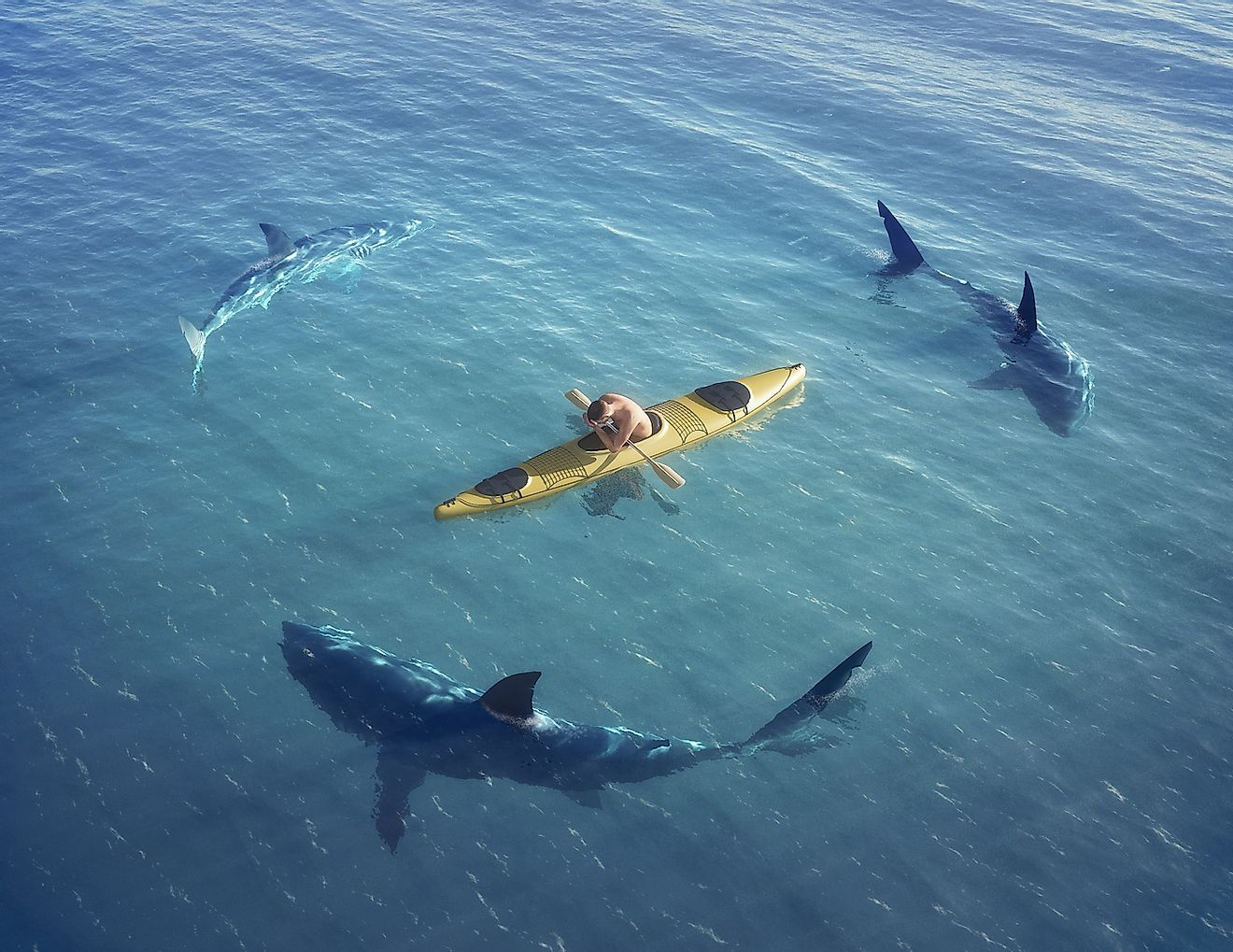 A kayaker surrounded by sharks. Image credit: Musicman/Shutterstock.com