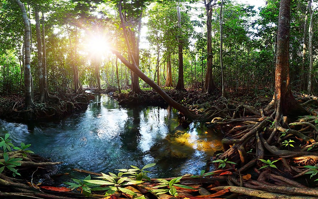 Peat swamp forest in Thailand.