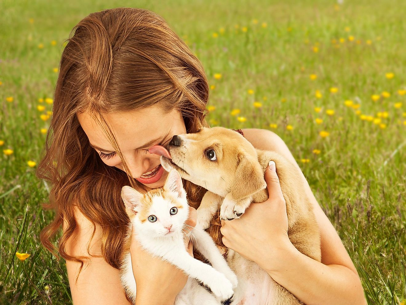 The majority of the pet owners in the United States own dogs and cats.
