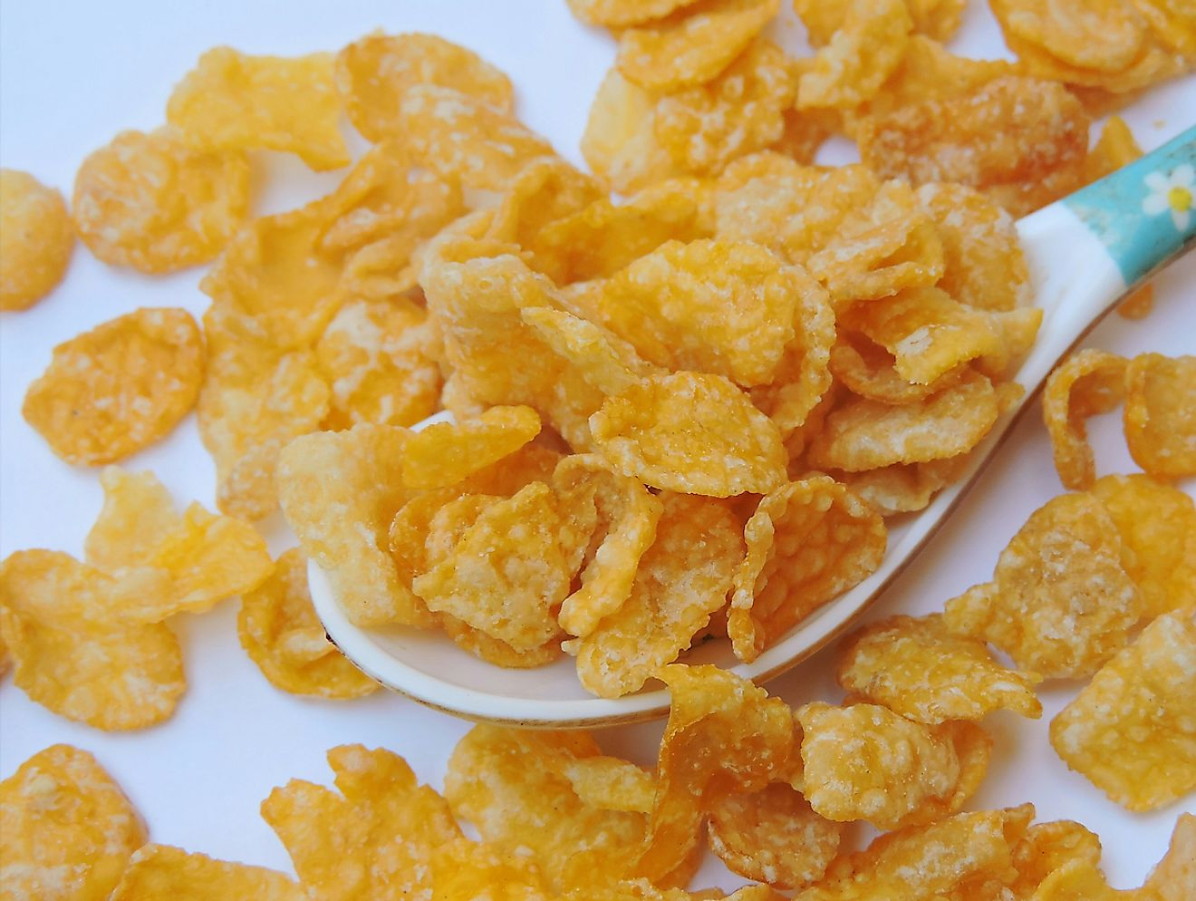 Corn flakes, or cornflakes, are a breakfast cereal made by toasting flakes of corn (maize). Image credit: Gyan Pratim Raichoudhury Shutterstock.com