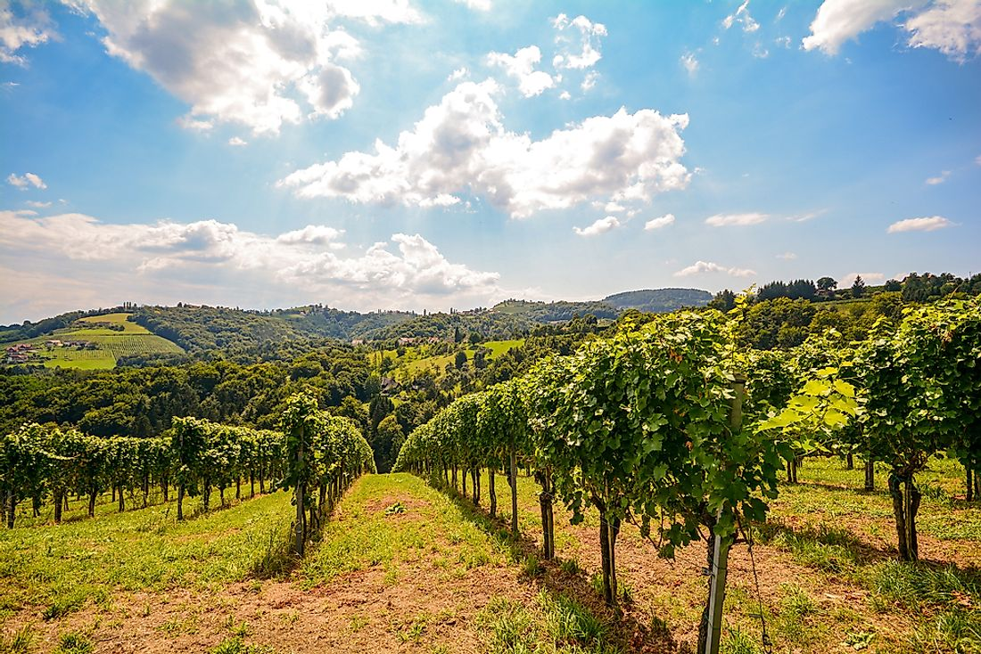 Vineyards in Austria. Food and drink is an important part of Austria's economy.