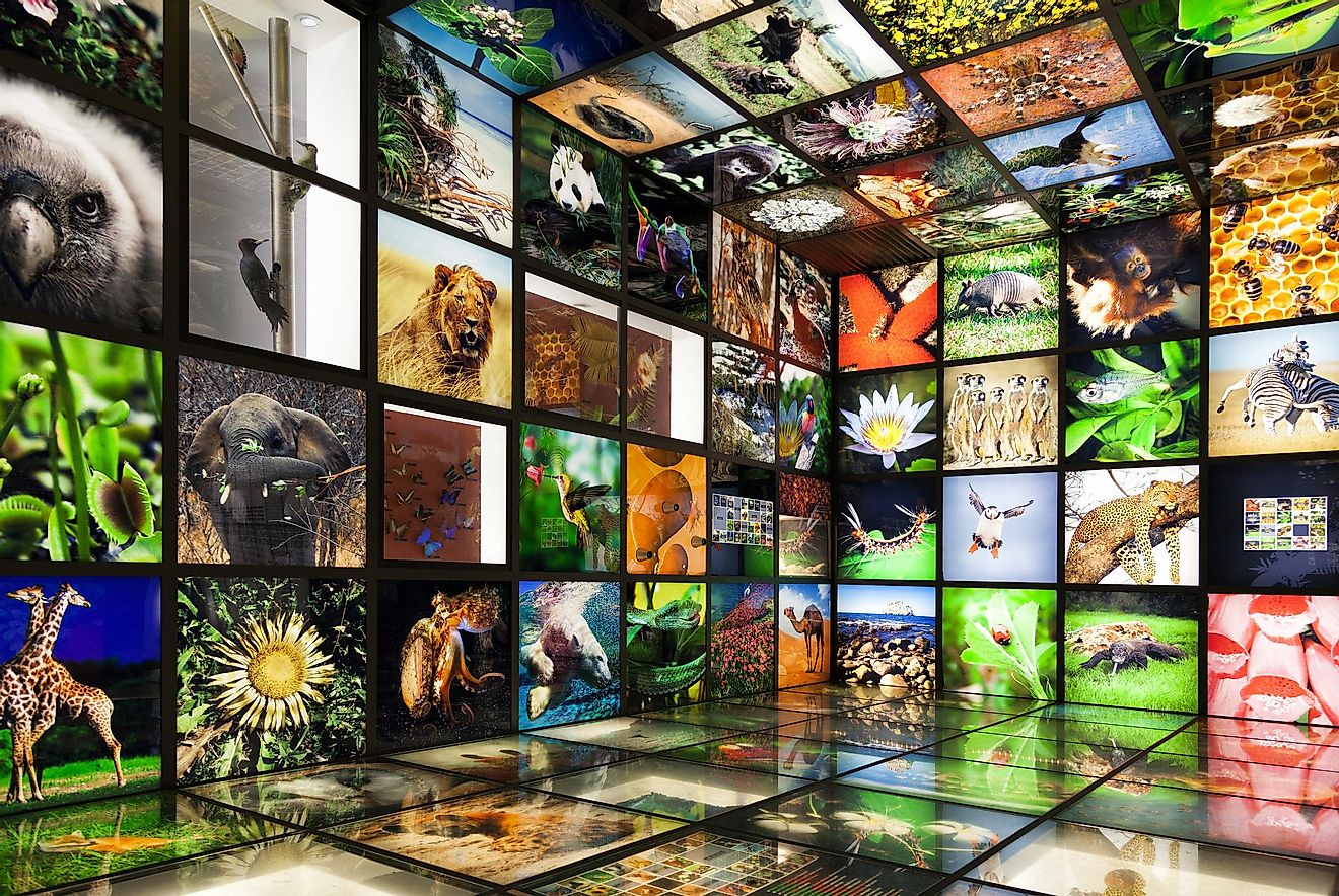 Inside the 'Torre Madariaga' multimedia biodiversity showroom.