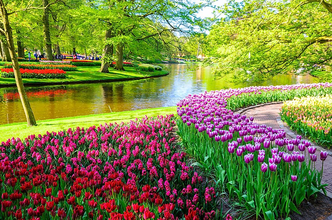 Flowers in the Keukenhof Gardens in the Netherlands, one of the world's most famous botanical gardens.