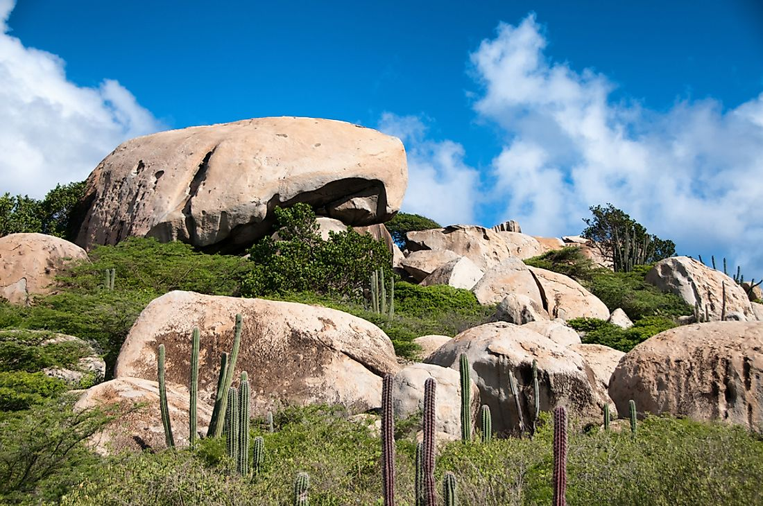 Cactuses and lizards are primarily found around the Ayo Rocks.