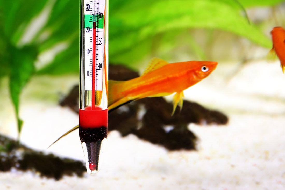 Thermometer in aquarium to measure the temperature of the water.