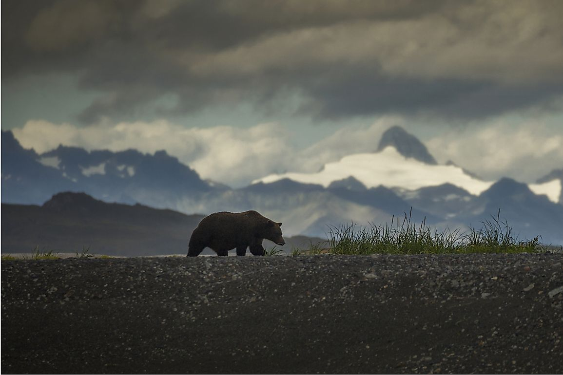 Alaska has the highest number of grizzly bears.