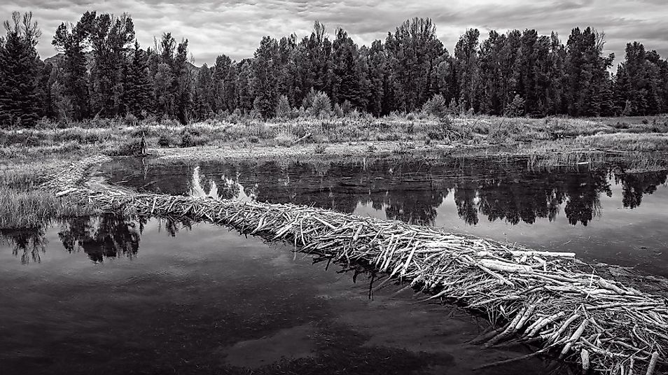 Beavers have skillfully inundated this land in the U.S. state of Wyoming.