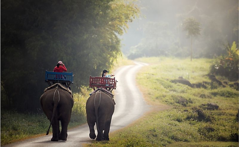 Elephant trekking through jungle in northern Laos.