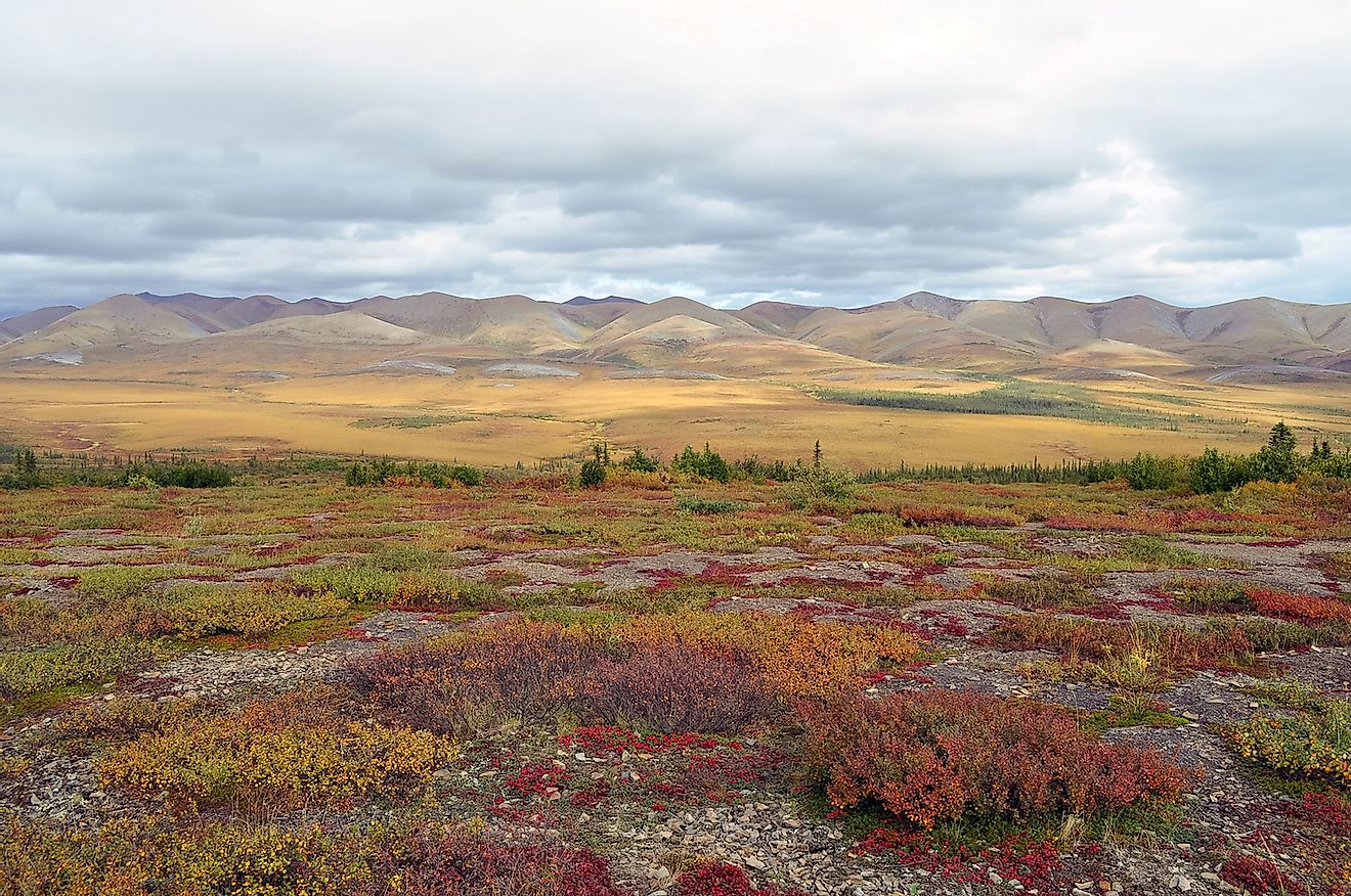 Arctic tundra in Canada with pink, purple and orange shrubs photographed during the day. Image credit: Linda Szeto/Shutterstock.com
