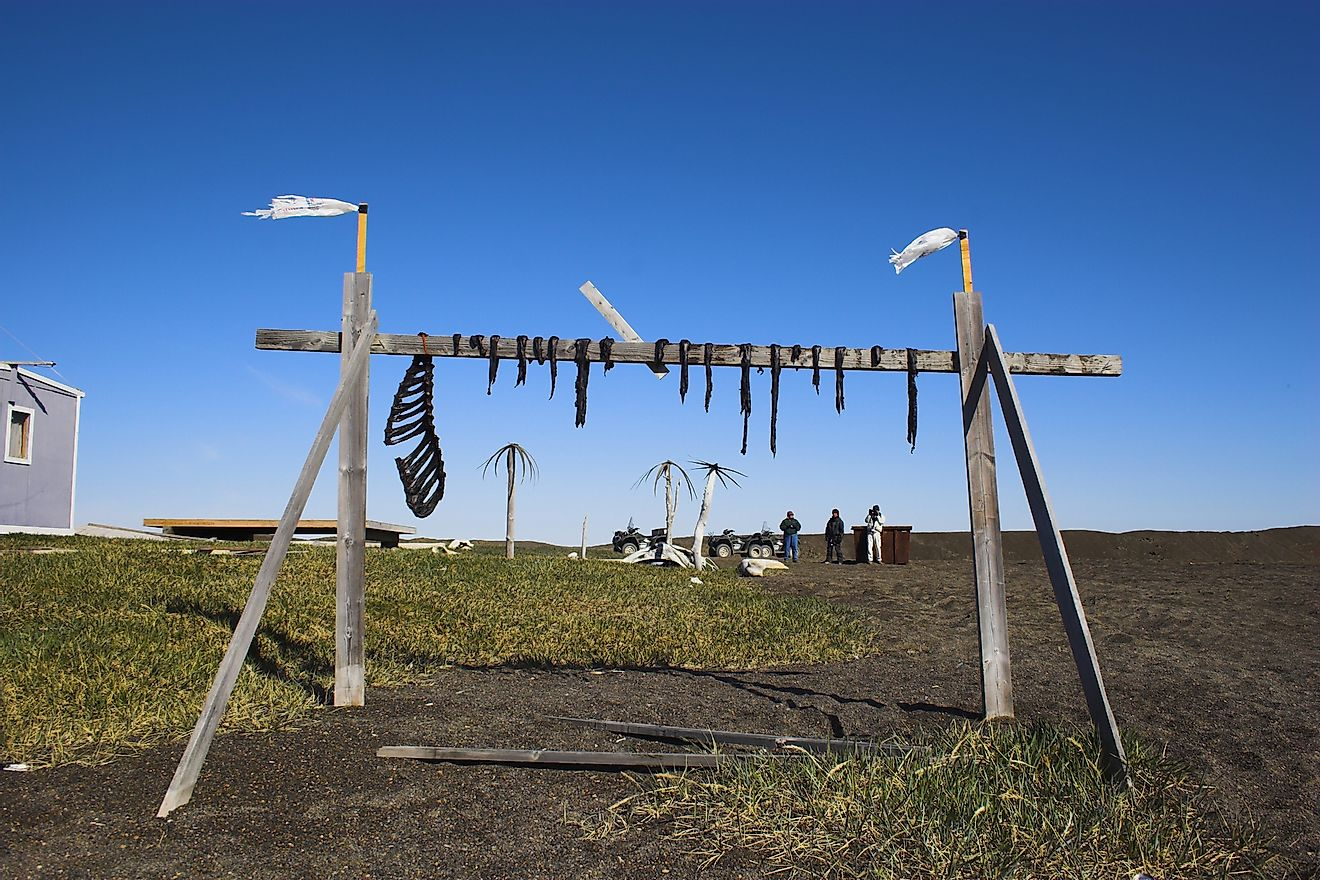 Traditional Inuit food - reindeer jerky on wooden rack drying at the shore of an Arctic Ocean. Image credit: George Burba/Shutterstock.com