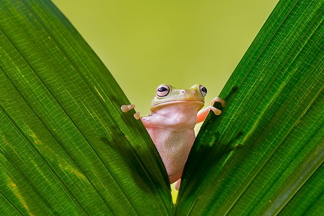A frog is an example of an amphibian.