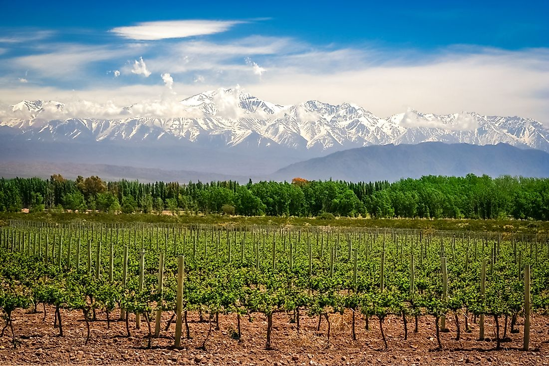 A vineyard in Argentina. Argentina drinks more alcohol than anywhere else in Latin America.