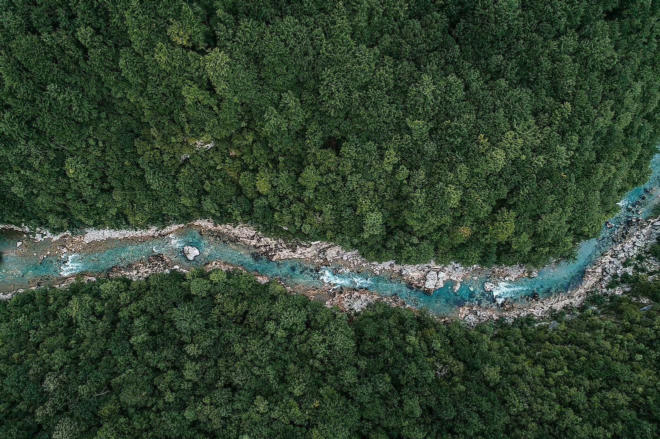 A rive flowing through a forest. Image credit: GoncharukMaks/Shutterstock.com