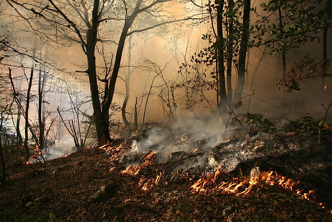 Surface fires consume twigs, leaves, and other litter on the earth's surface.