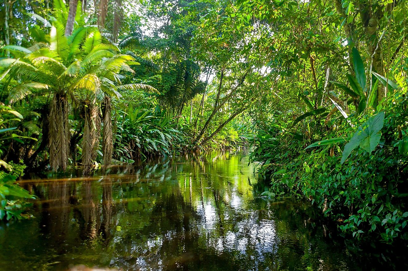 The Amazon rainforest is the world's largest tropical rainforest.