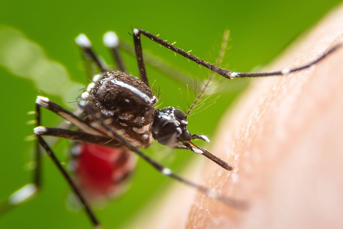 Many deadly diseases are transferred to humans by mosquitoes.