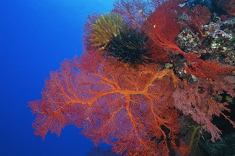 A coral reef in New Caledonia's Natural Park of the Coral Sea, the largest protected area on earth.