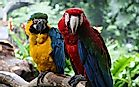 Bright And Beautiful: The Types Of Macaws Living In The World Today