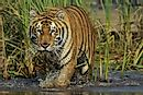 Where Is Sundarbans National Park?
