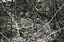 ​​Did You Know The Mysterious Aokigahara Forest Is Also Known As The Suicide Forest?