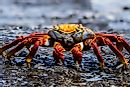 What is a Crustacean?