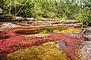 Caño Cristales River, Colombia - Unique Places around the World