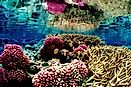 Coral Reefs - Location, Formation, and Significance