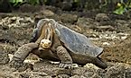 What Animals Live On The Galapagos Islands?