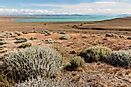 Where Does The Patagonian Desert Lie?
