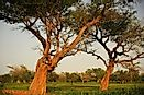 Mali's National Parks And Reserves