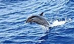 What is the Difference Between a Dolphin and a Porpoise?