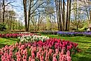 Keukenhof, Netherlands - Unique Places around the World