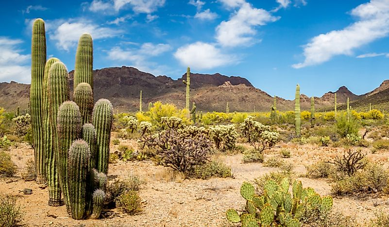 What Are The Special Adaptations Of Desert Plants?