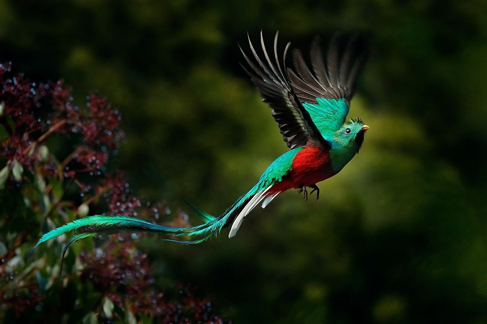 Costa Rica's Most Beautiful Birds