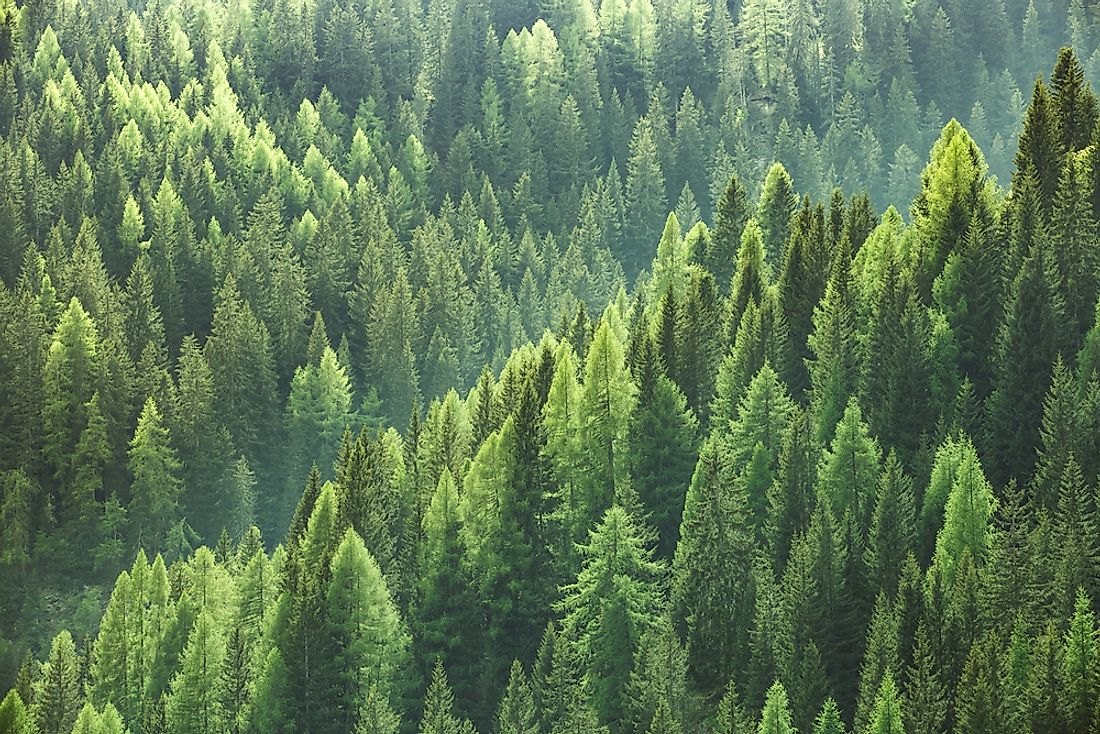Did You Know That There Are More Trees On Earth Than Stars In The Milky Way?