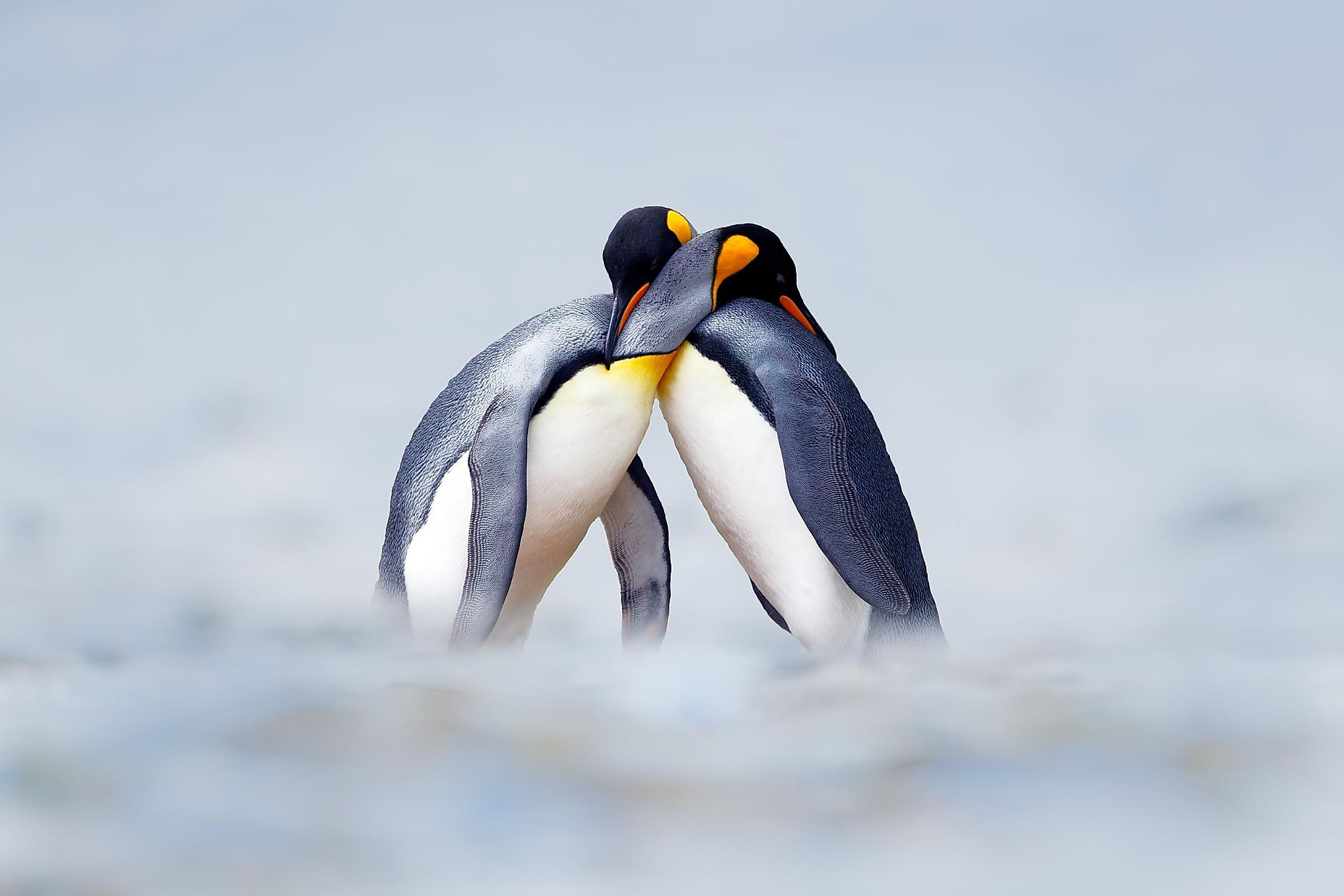 Animals With The Most Elaborate Courting Rituals