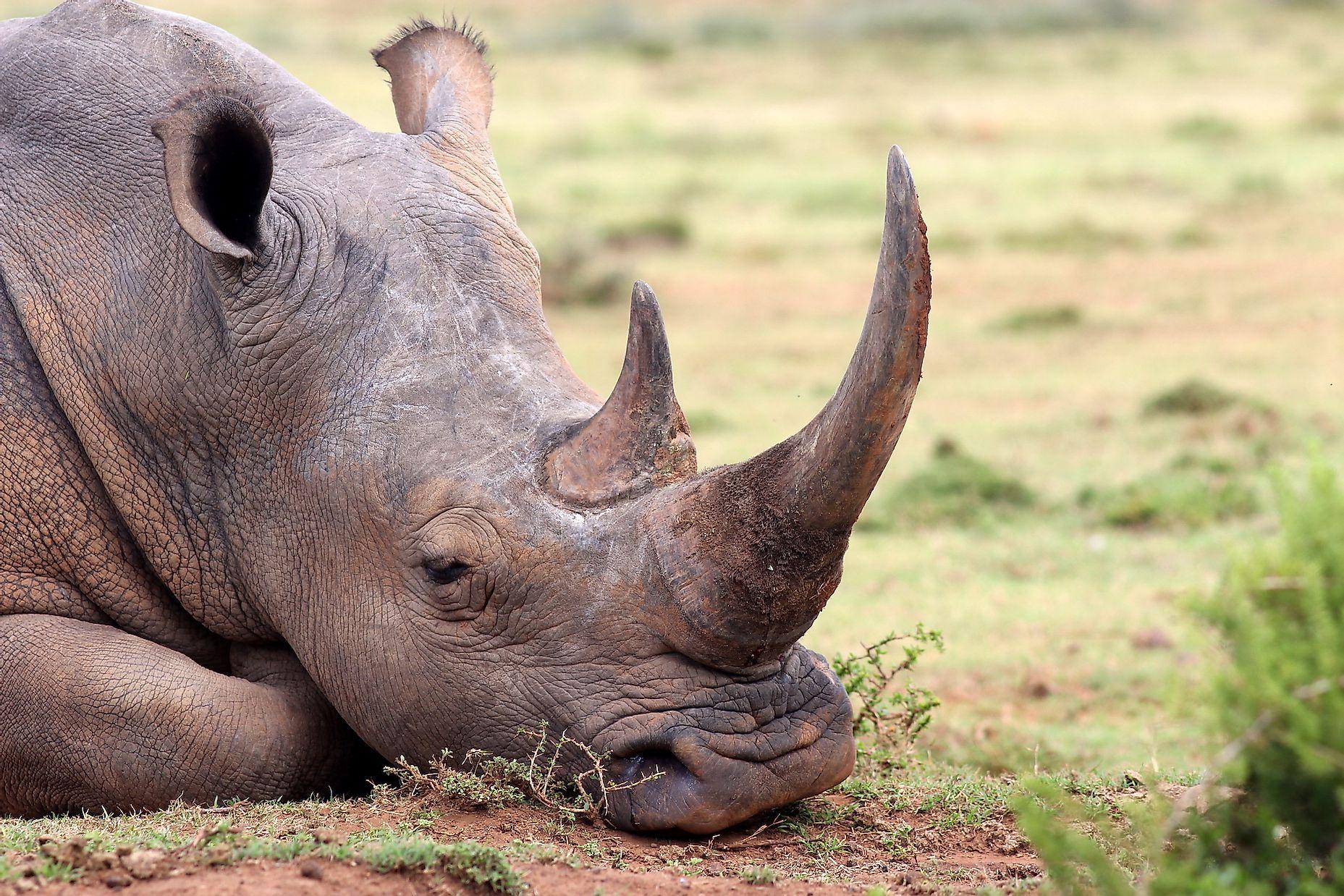 Featured Animals - Black Rhino - CMZoo